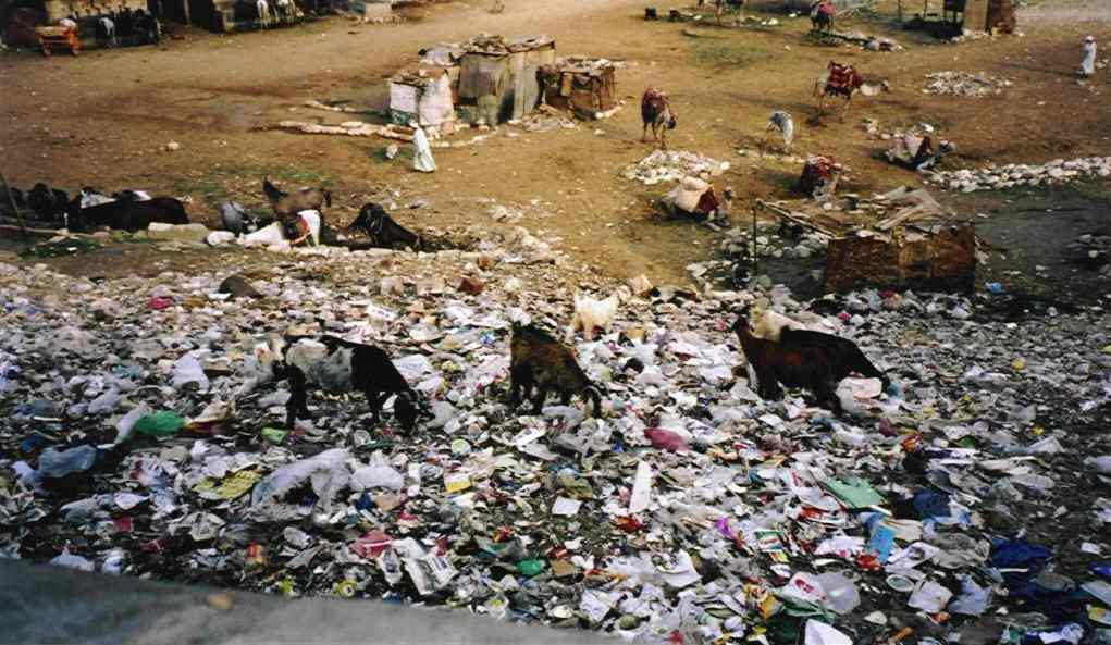 Finally, this picture shows the other side of the Giza Plateau. This is the dump next to the stables on the main approach road to the site. The goats were actually finding things to eat...